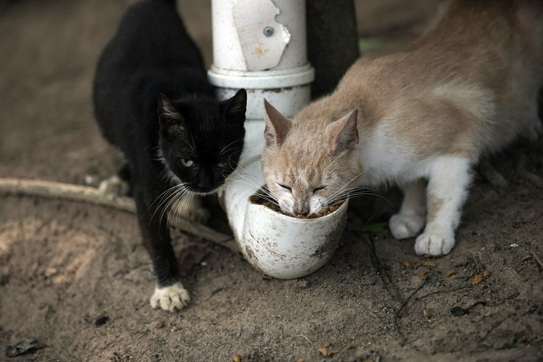 En Isla de Gatos en Brasil, pandemia ha llevado a hambruna