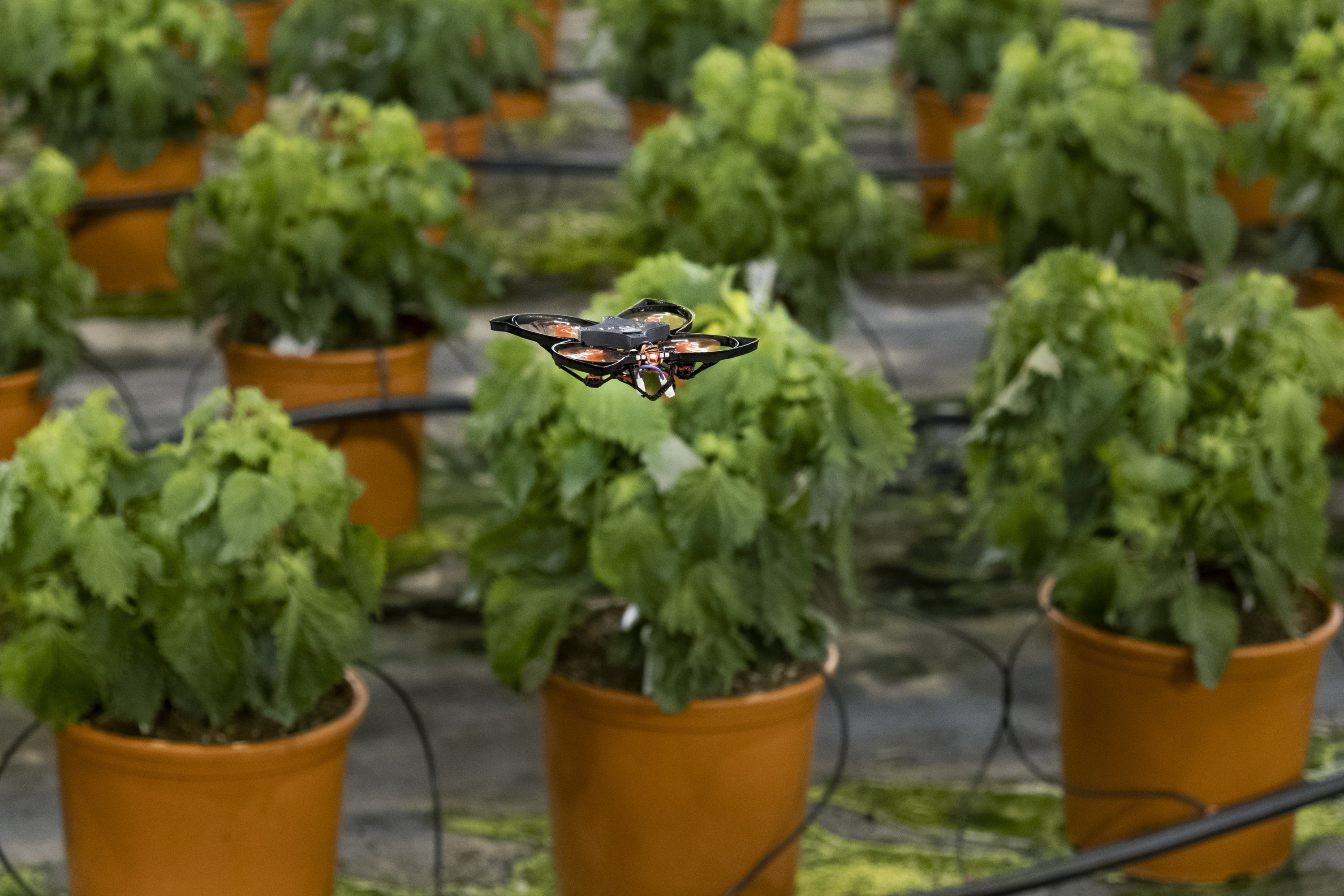 Drones vs hungry moths: Dutch use hi-tech to protect crops...