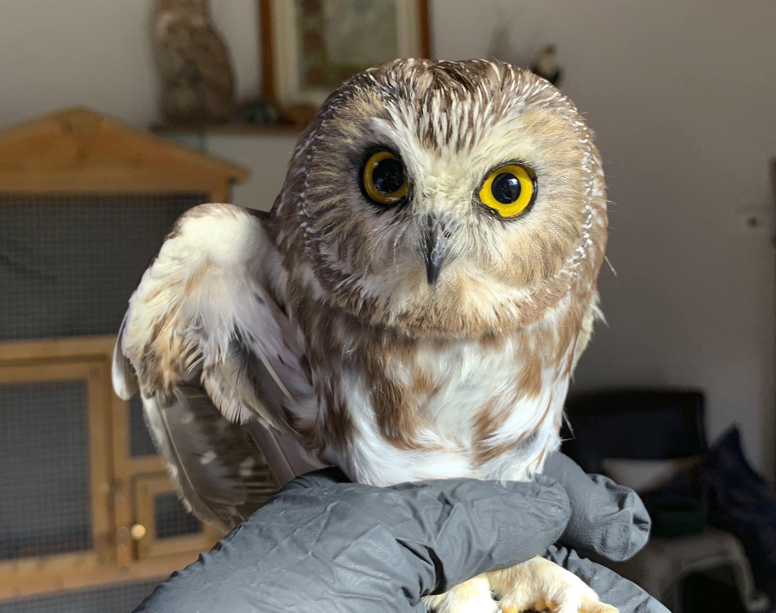 Hoot hoot hoot! Owl in Rockefeller Center Christmas tree – Associated Press