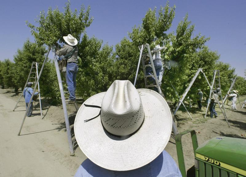FILE - In this May 13, 2004, file photo, a foreman watches workers pick fruit in an orchard in Arvin, Calif. On Monday, July 12, 2021 lawsuits were filed in four California counties seeking potential class-action damages from Dow Chemical and its successor company over a widely used bug killer containing Chlorpyrifos that has been linked to brain damage in children. Chlorpyrifos is approved for use on more than 80 food crops, including oranges, berries, grapes, soybeans almonds and walnuts, though California banned the sales of the pesticide last year and ended spraying this year.(AP Photo/Damian Dovarganes, File)