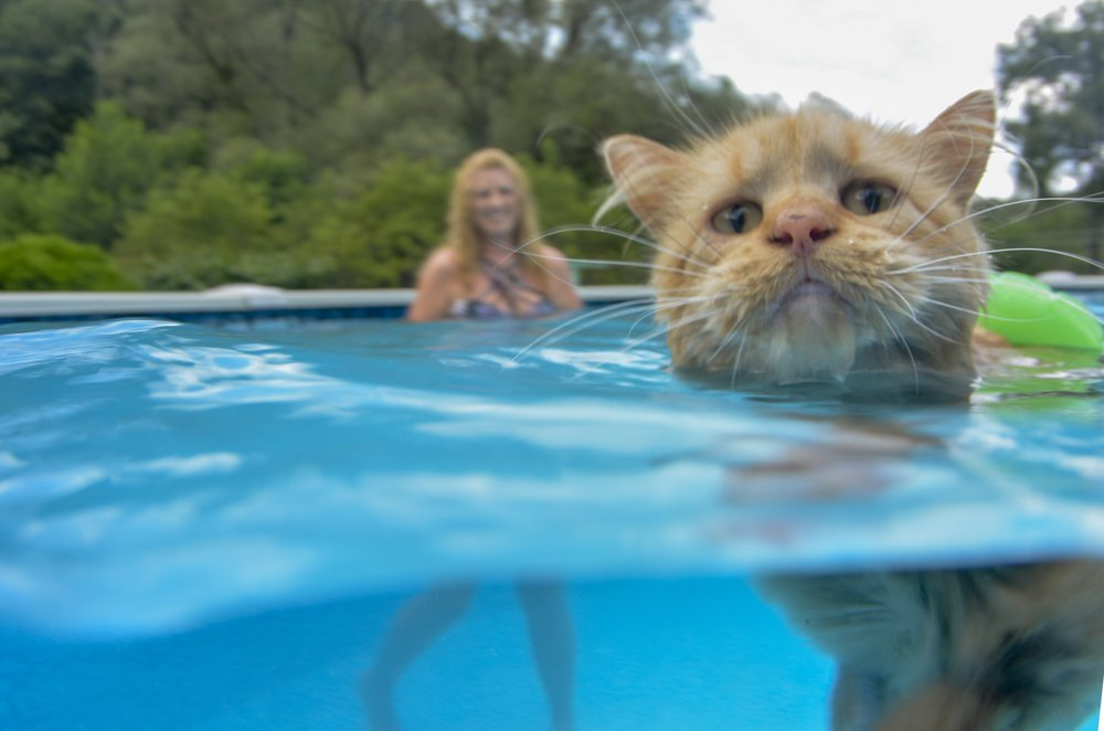 Cat Cools Off in Pool