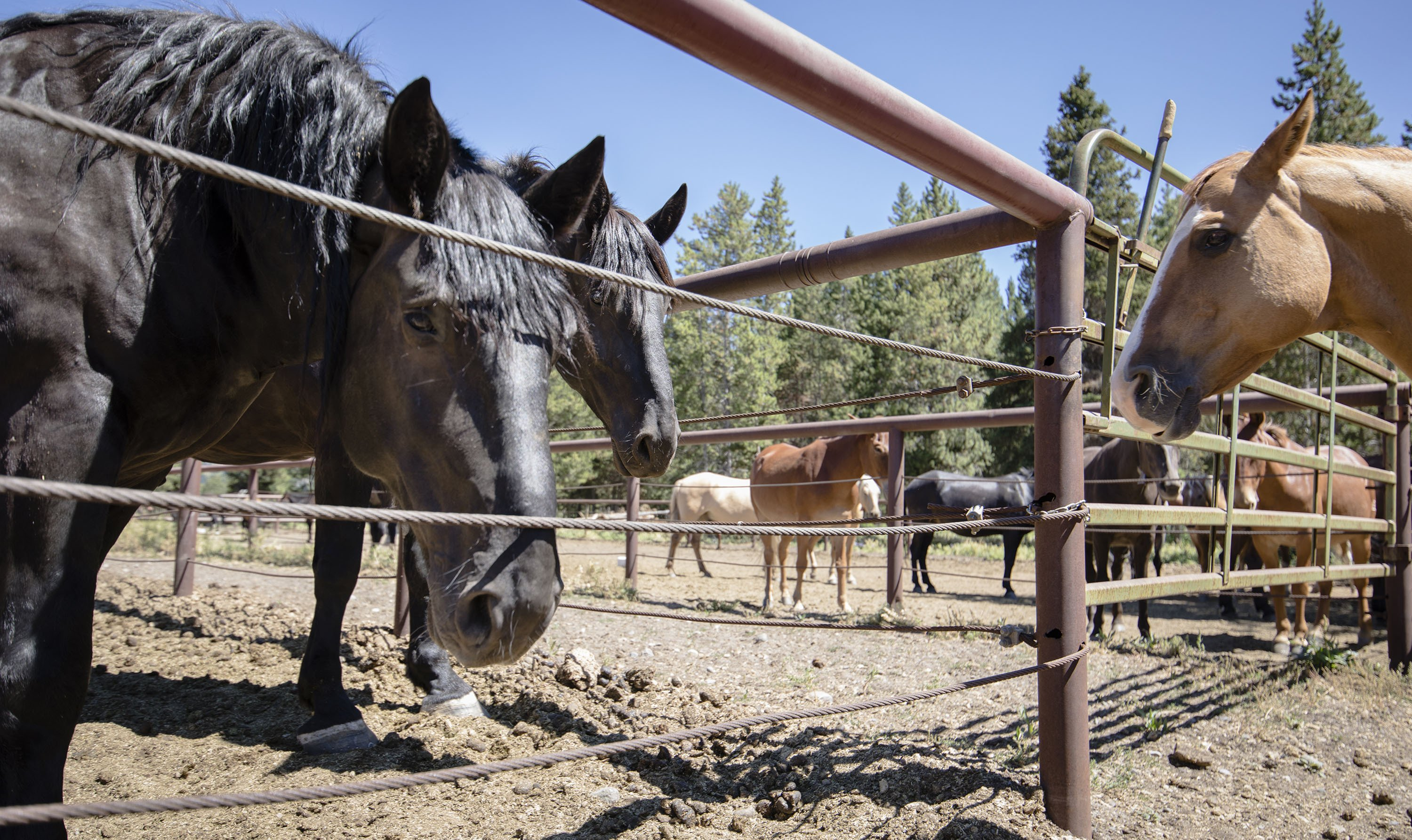 Program Trains Wild Horses For Use In Wyoming Forest