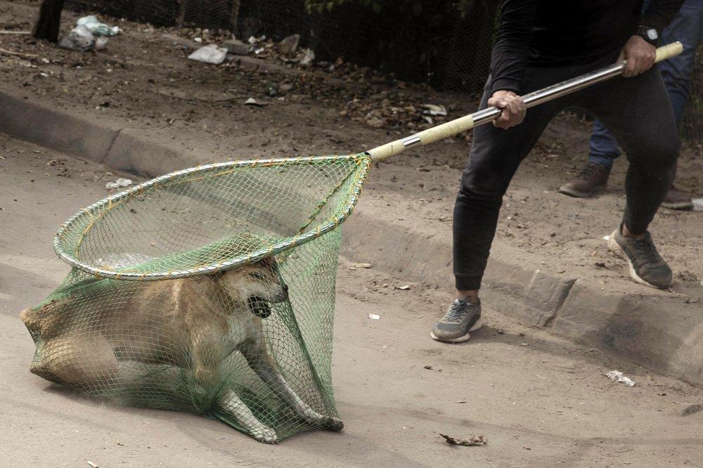 Los perros callejeros de Egipto, una vez vilipendiados, tienen la oportunidad de una vida mejor - 1000