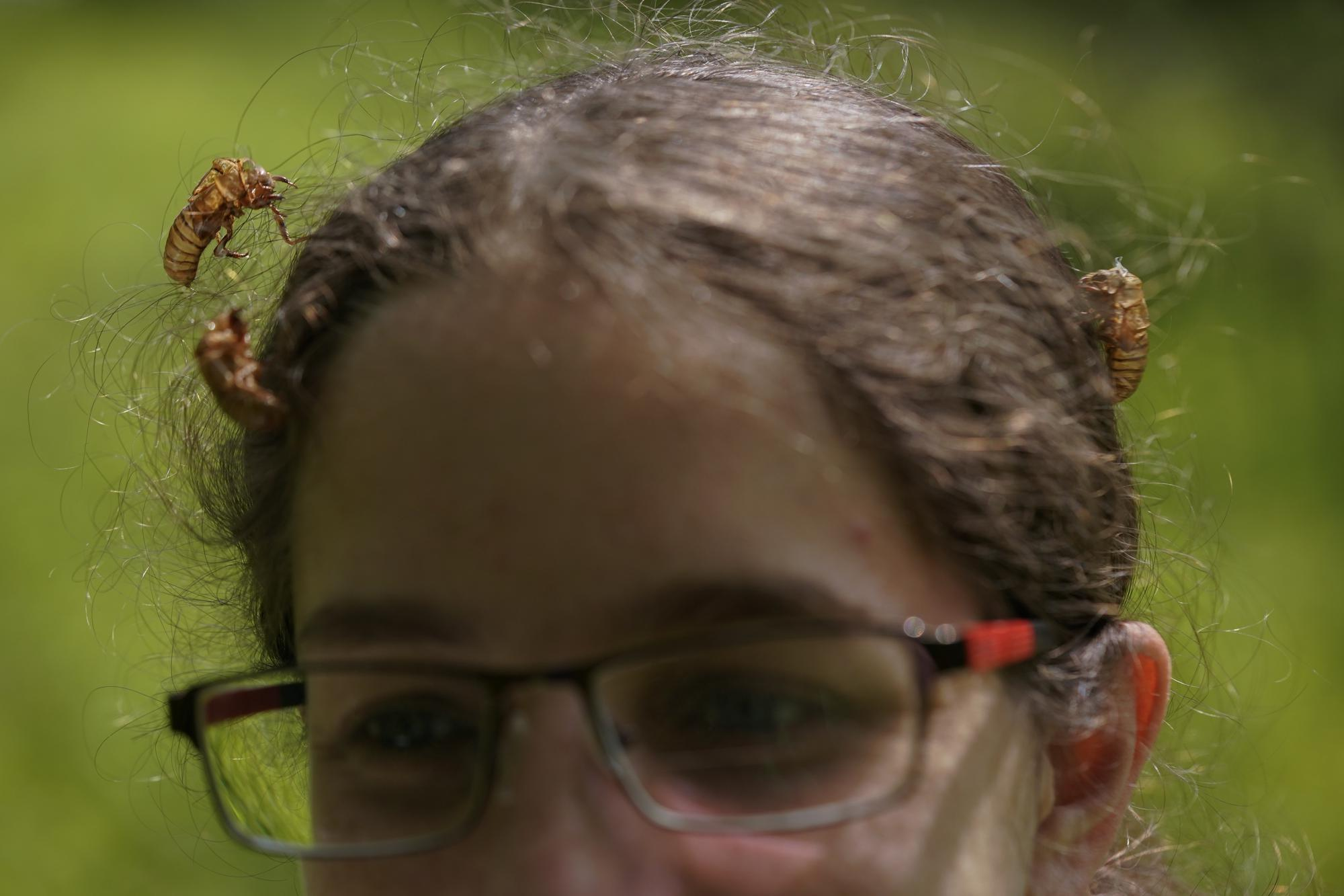 Dr. Zoe Getman-Pickering, a postdoctoral scientist at George Washington University, walks through Woodend Sanctuary and Mansion with cicada shells in her hair, Monday, May 17, 2021, in Chevy Chase, Md. (AP Photo/Carolyn Kaster)