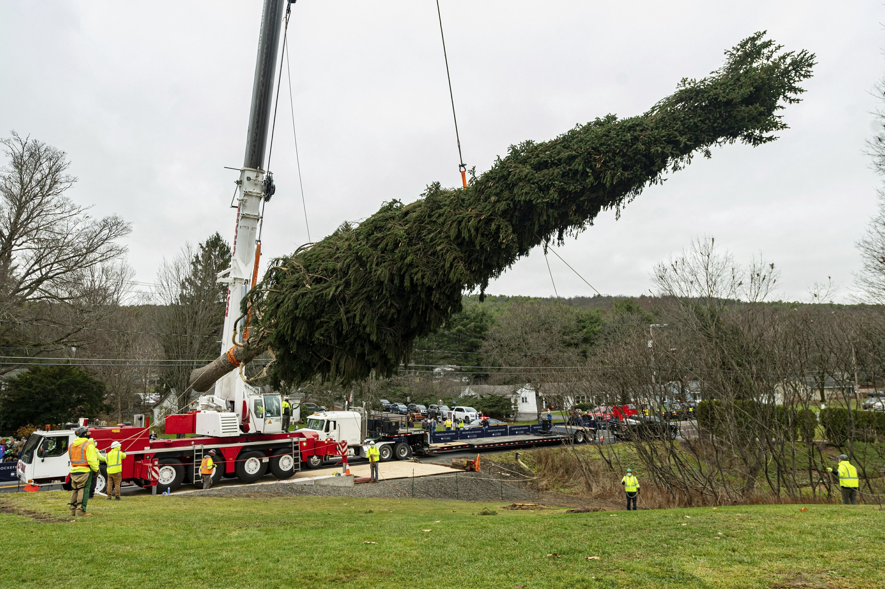 75-foot spruce to be NYC's Rockefeller Center Christmas tree
