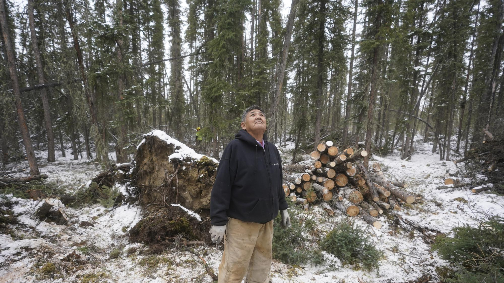 """Alfred Jonathan looks at the trees Thursday, Sept. 23, 2021, in Tanacross, Alaska.""""If somebody gets sick around there, there's no place to take them,"""" said 78-year-old Alfred Jonathan. He tells people that COVID is here.""""This one is pretty scary,"""" said Jonathan, who encouraged people to get vaccinated if for nothing else, for the sake of their children and grandchildren. """"And the other people that didn't get vaccinated?"""" he said. """"Gosh, we're afraid for them.""""(AP Photo/Rick Bowmer)"""