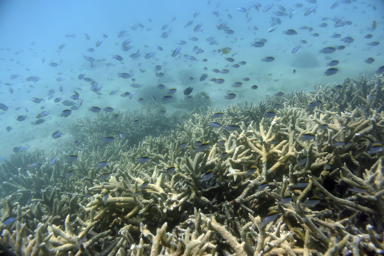 Australia Lowers Great Barrier Reef Outlook To Very Poor