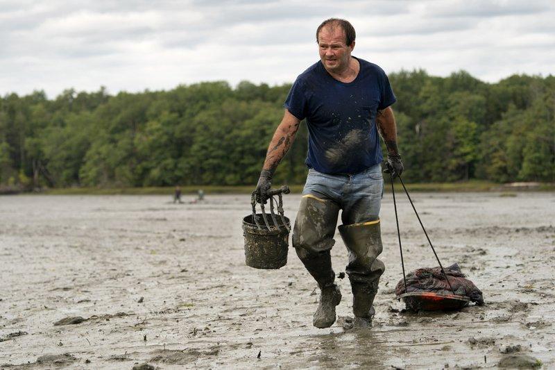 Clammers digging through despite coronavirus pandemic, but shellfish are fewer