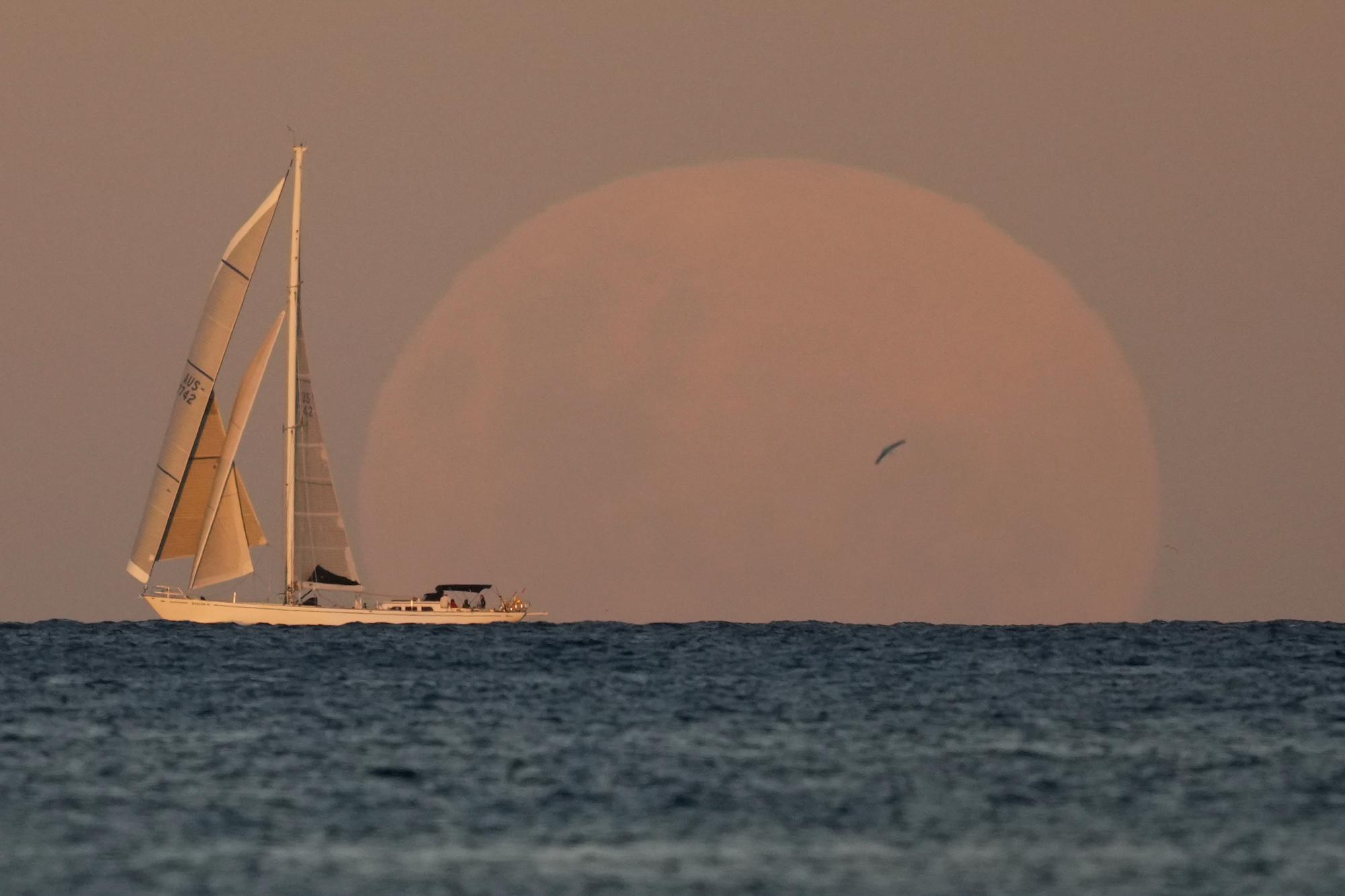 A yacht sails past as the moon rises in Sydney Wednesday, May 26, 2021. (AP Photo/Mark Baker)