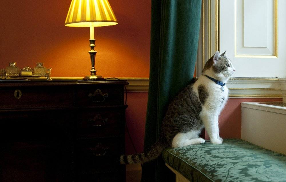 UK's chief mouser catcher Larry the cat celebrates 10 years on the prowl