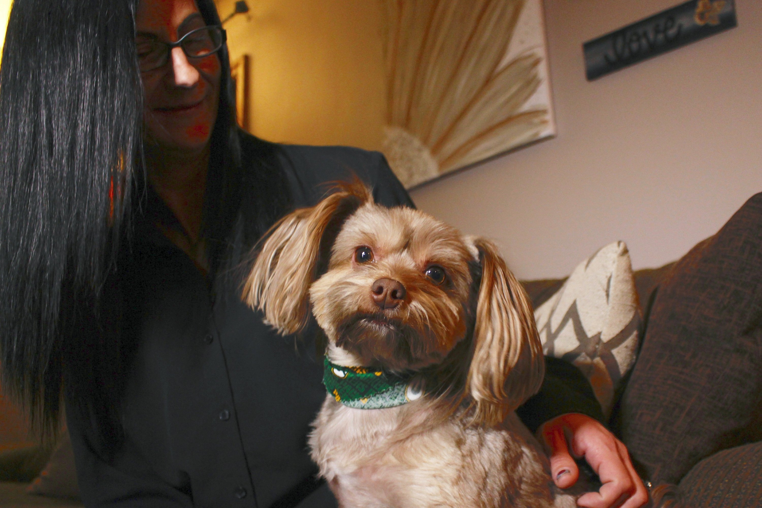 post-image-Researchers: Some pet products touted as CBD don't have any