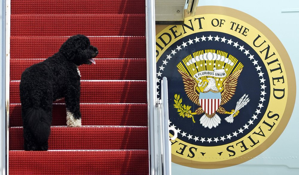 Champ and Major, Biden's 2 dogs settle in at White House