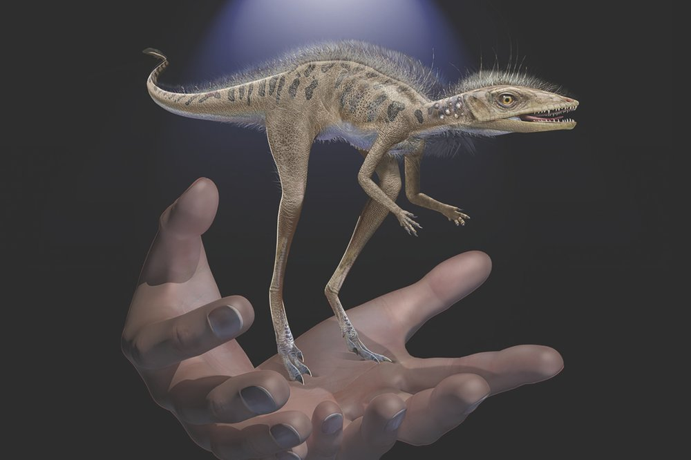 Kongonaphon kely, a pocket sized dinosaur forerunner is smaller than your cellphone