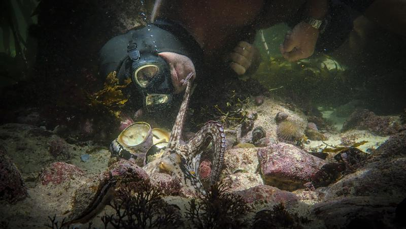 """Oscar for best documentary goes to """"My Octopus Teacher"""""""