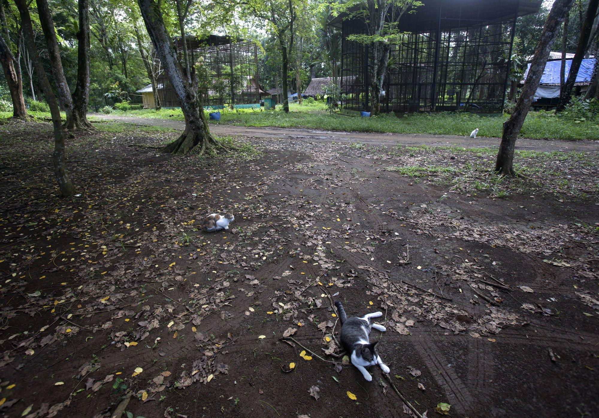 Нет посетителей — нет дохода — нет еды: как страдают животные из-за закрытия зоопарков (ФОТО)