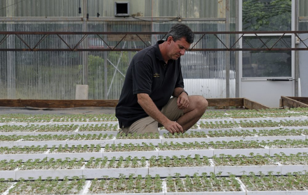 North Carolina proposes smokable hemp ban as demand grows