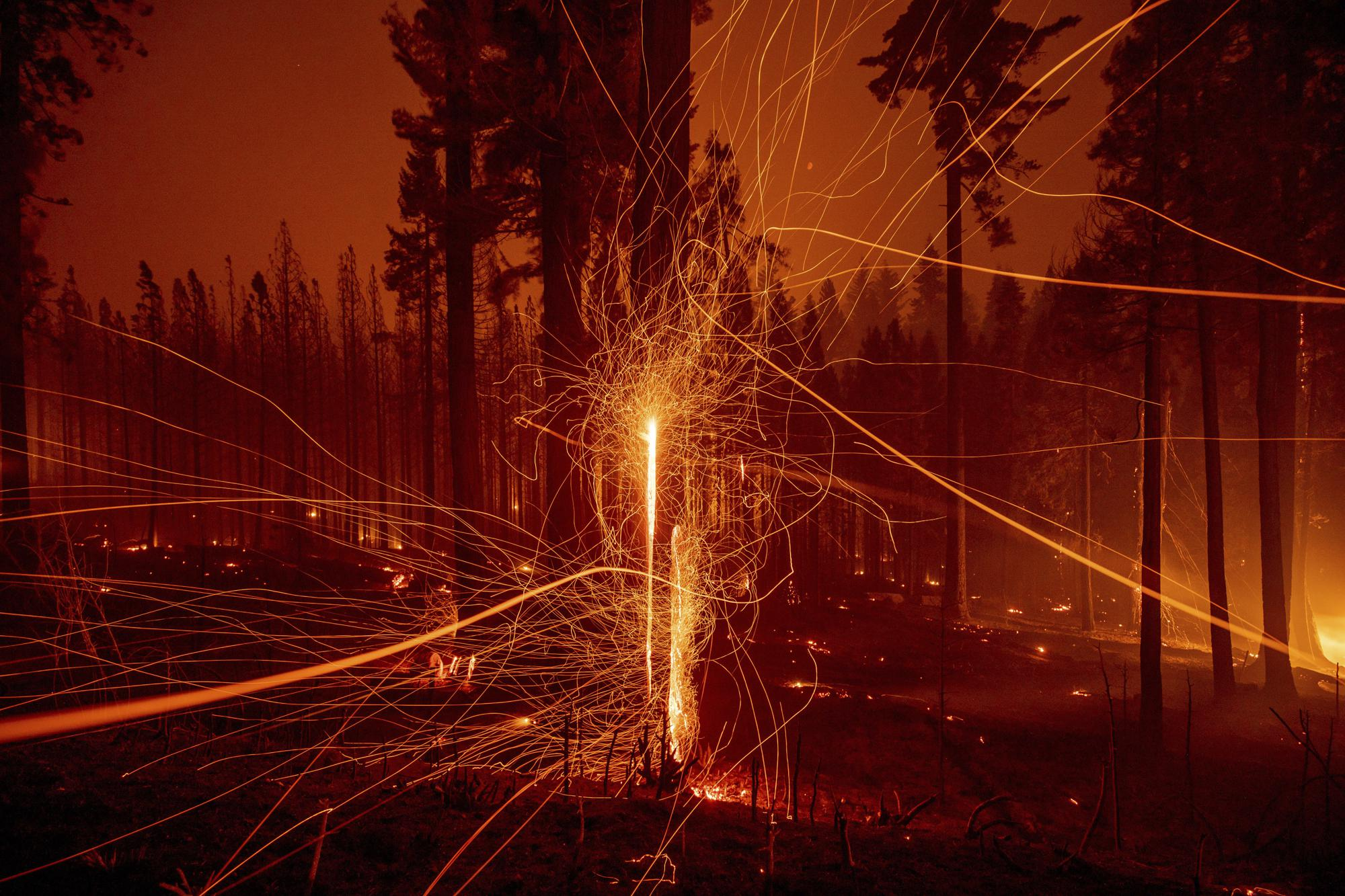 Embers fly from burning trees as the Caldor Fire grows on Mormom Emigrant Trail east of Sly Park, Calif., on Tuesday, Aug. 17, 2021. (AP Photo/Ethan Swope)