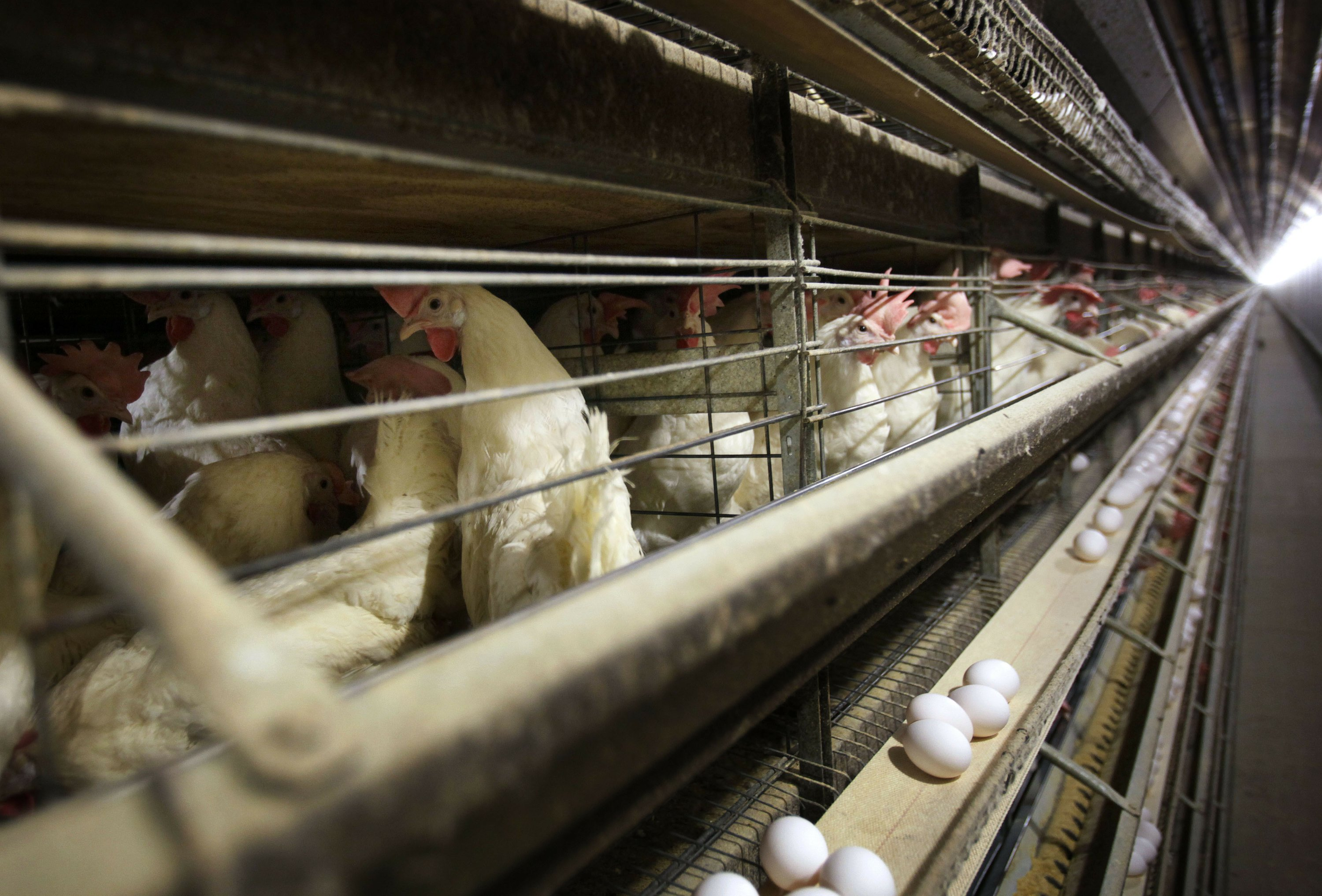 US chickens headed to China after Beijing lifts 5-year ban