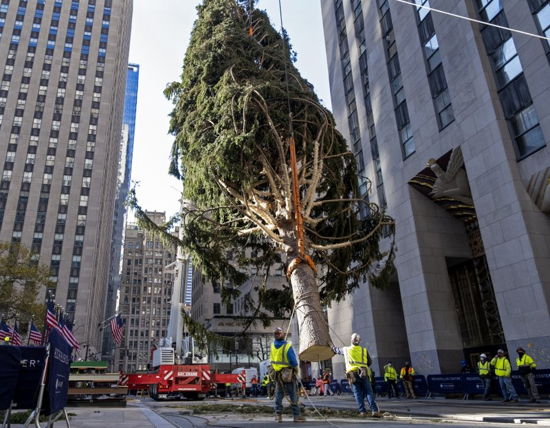 rockefeller center christmas tree goes up lighting dec 2 rockefeller center christmas tree goes