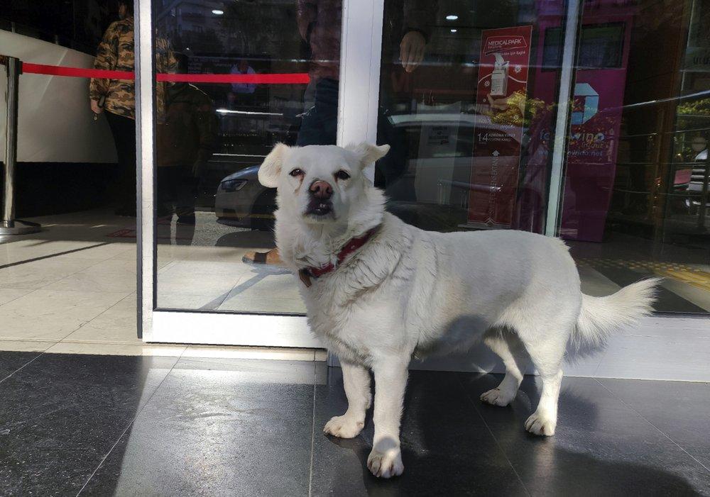Old faithful: Dog spent days outside Turkish hospital waiting for owner