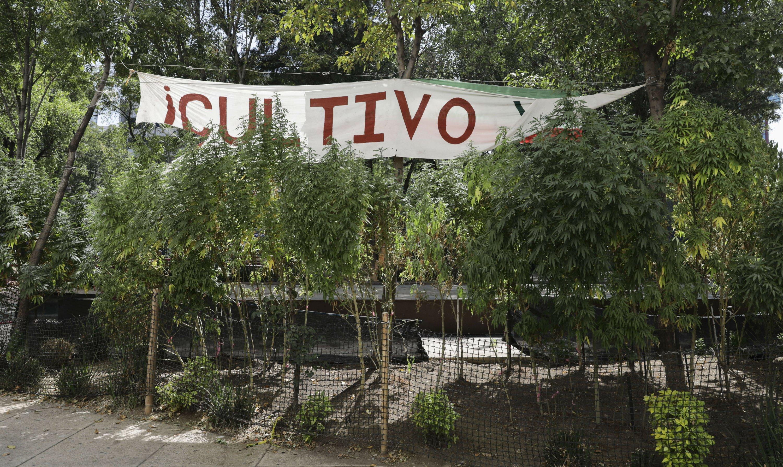 post-image-Mexican church decries Senate's marijuana legalization vote