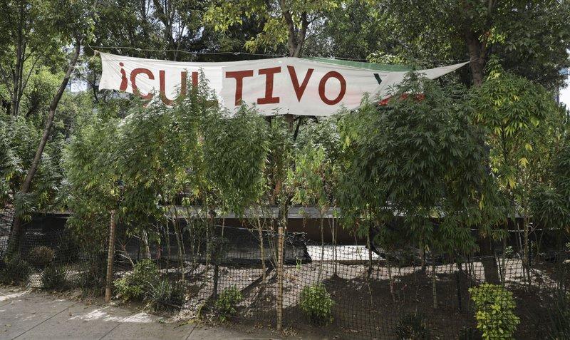 Mexican lawmakers approve marijuana legalization bill