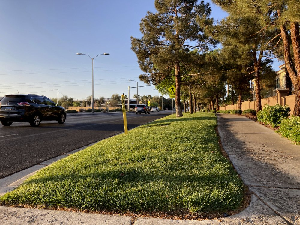 Las Vegas pushes to ban ornamental grass