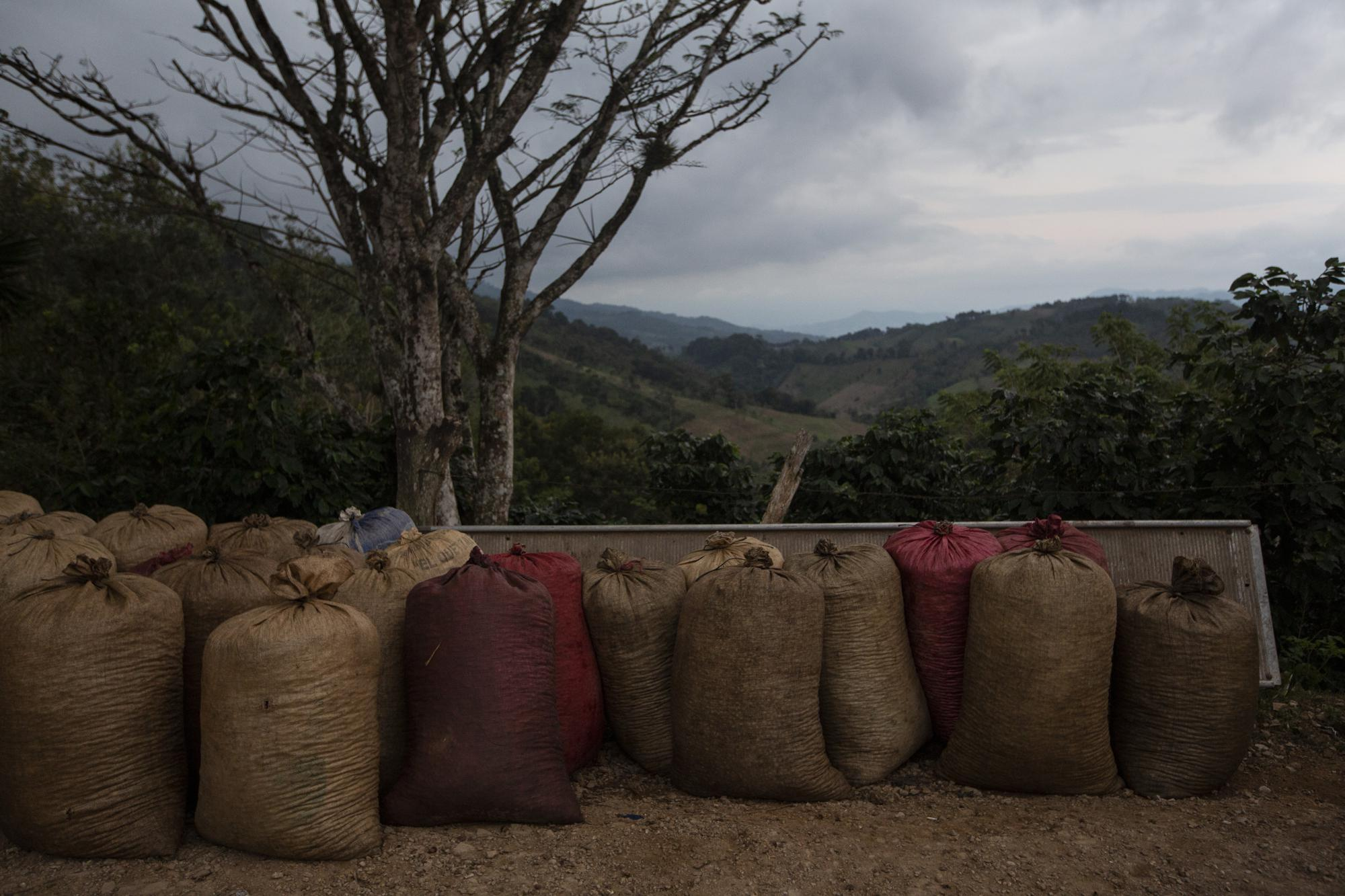Bags of freshly picked coffee wait to be loaded on a truck in Tizamarte, Guatemala, Wednesday, Dec. 9, 2020. Locals survive on the remittances sent from migrants to Guatemala, where average monthly earnings are less than the cost of the basket of basic goods. (AP Photo/Moises Castillo)