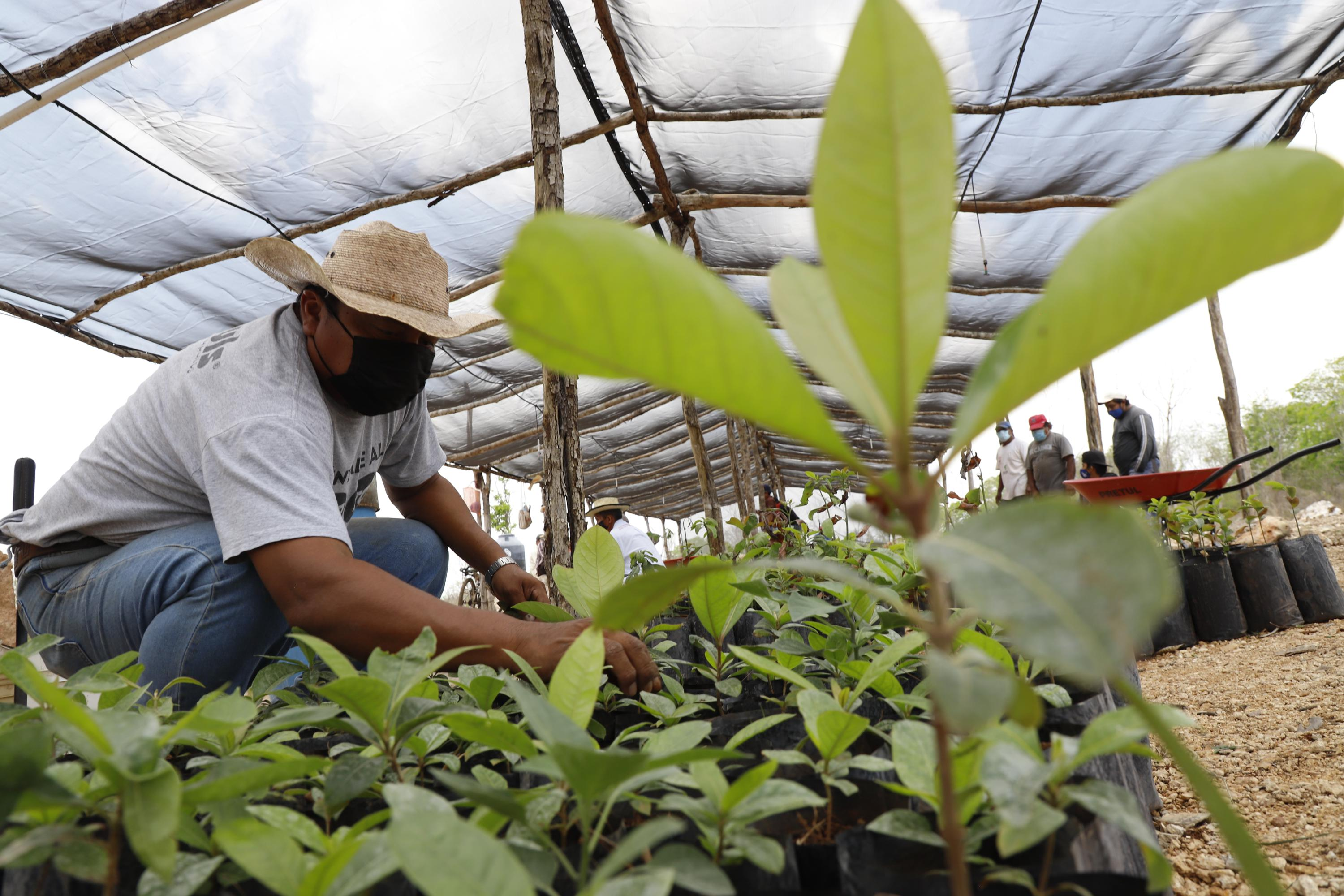 Mexican president pushes controversial reforestation plan
