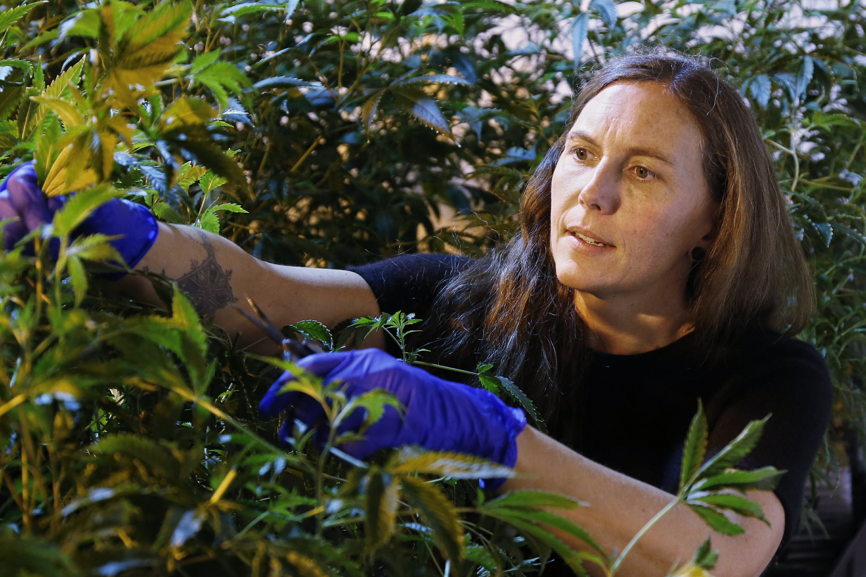 Pot entrepreneurs flocking to the Bible Belt for low taxes
