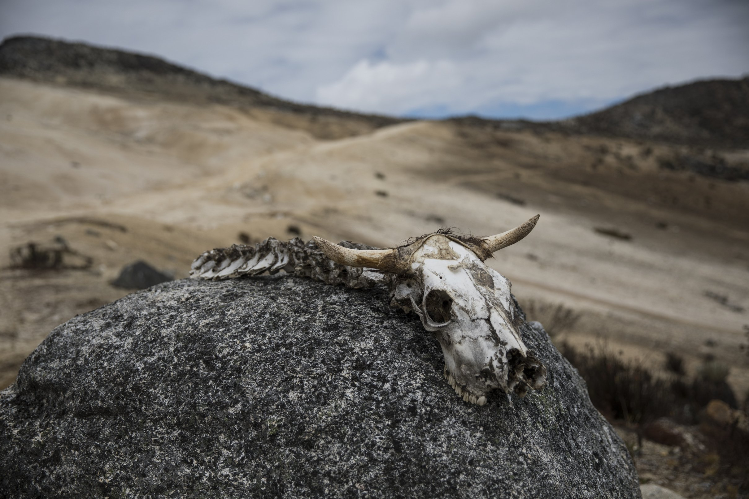 Hardy scientists trek to Venezuela's last glacier amid chaos