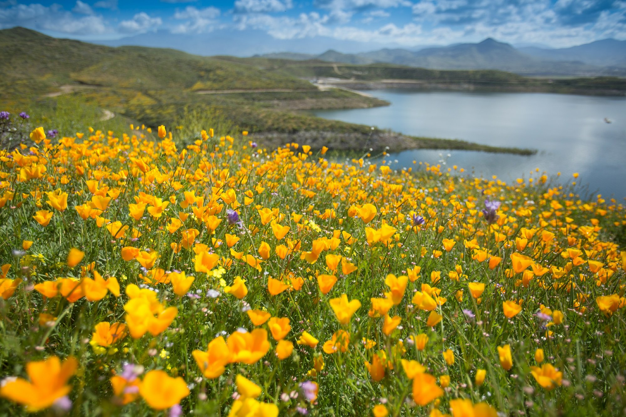 Spectacular Wildflower Super Bloom Expected to Return to