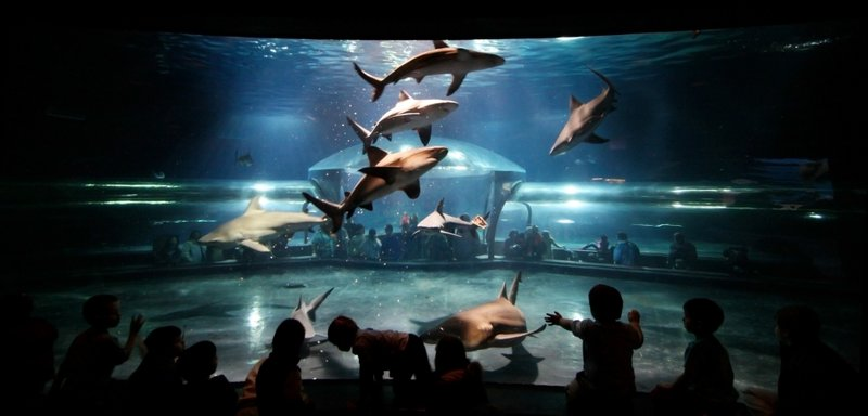 Calling All Scuba Divers: Oklahoma Aquarium to Allow One Lucky Diver in Bull Shark Tank