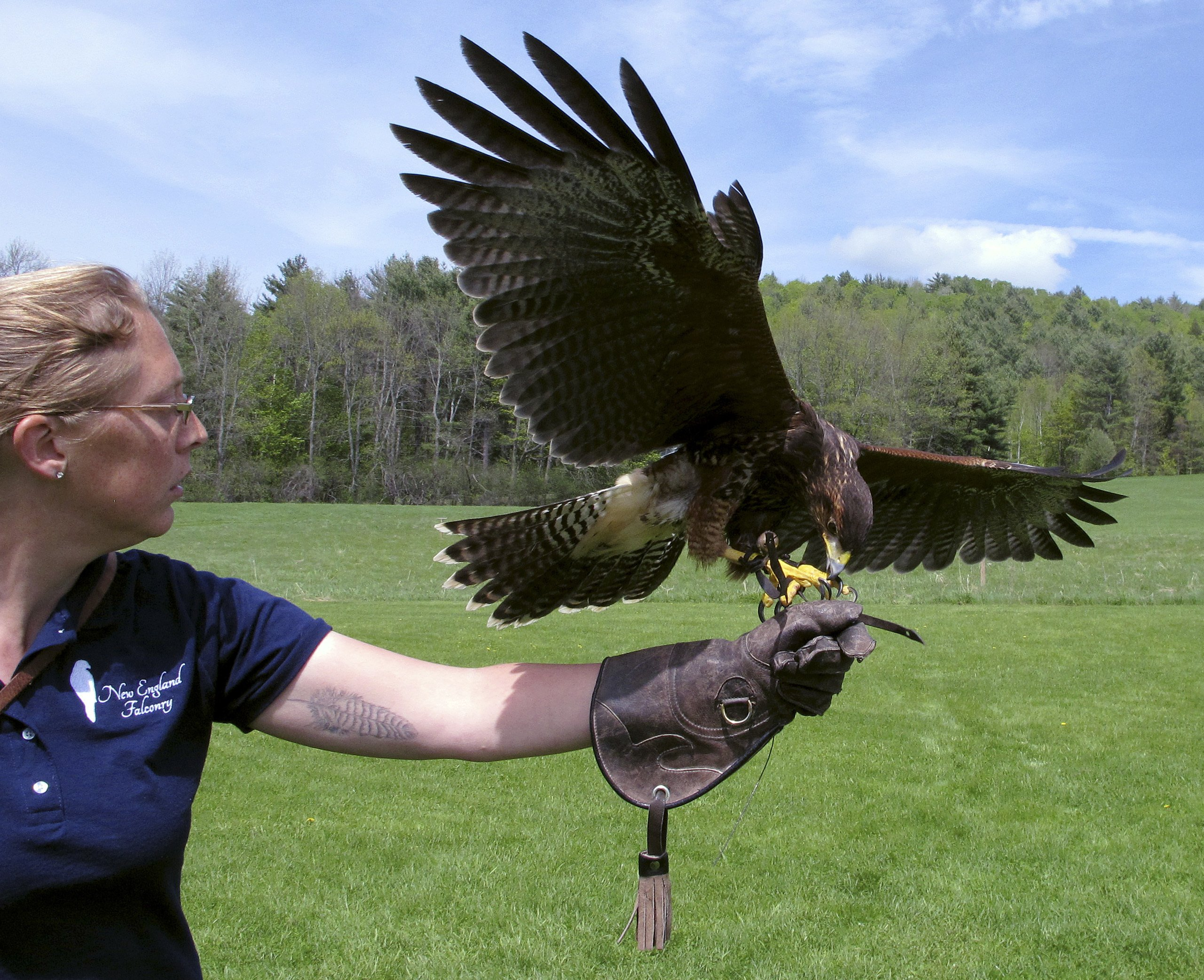 Tourists Can Now Experience The Ancient Sport Of Falconry