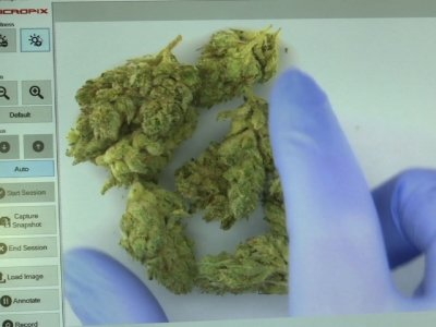 Testing Labs Brace for New Calif. Cannabis Rules