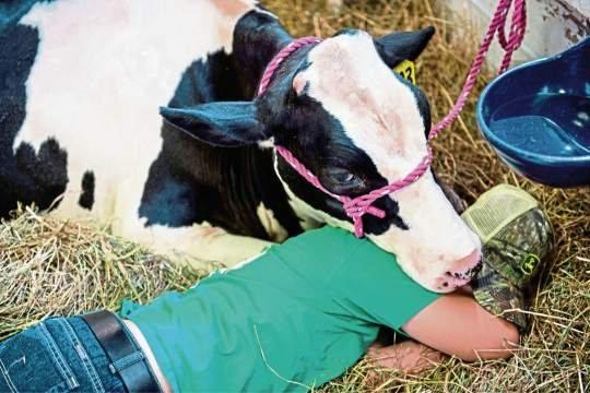 Editorial: Westmoreland Co. fair gives farmers their day in the sun