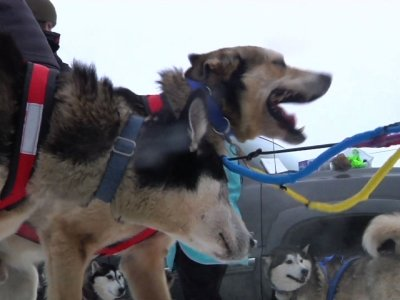 PETA Protests Iditarod Sled Dog Race