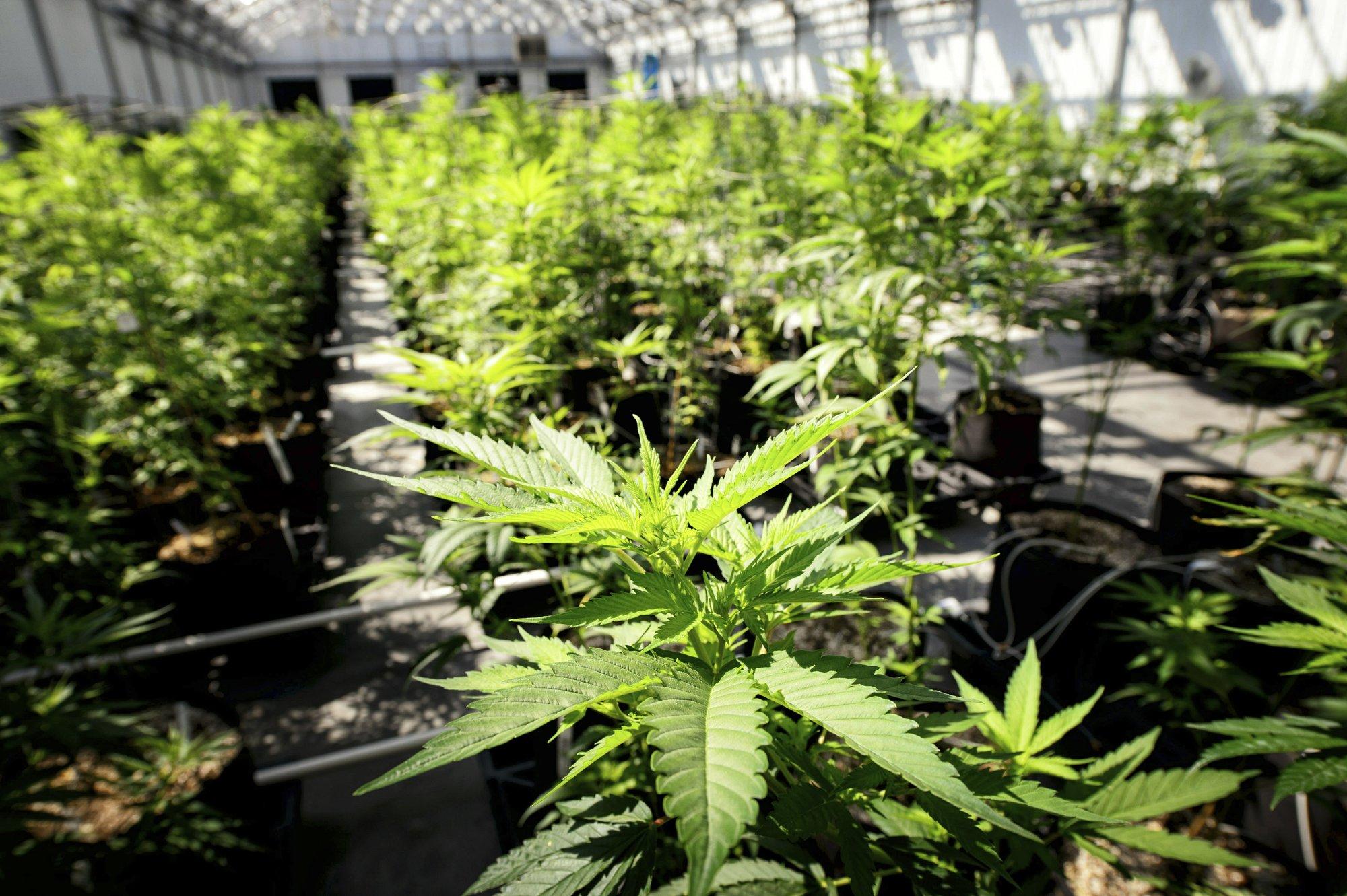 Pot 'legalization 2.0': Social equity becomes a key question