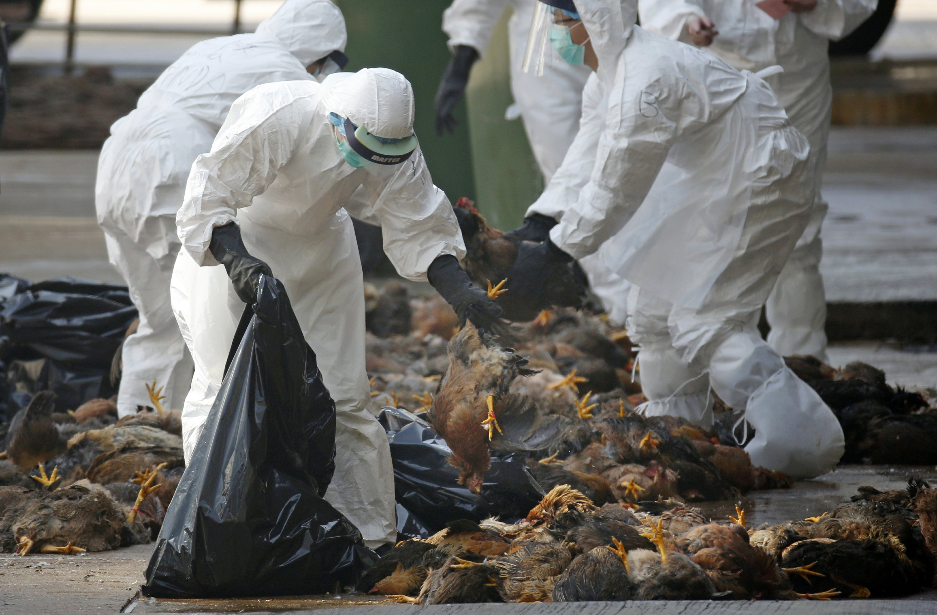 UN sees bird flu changes but calls risk of people spread low