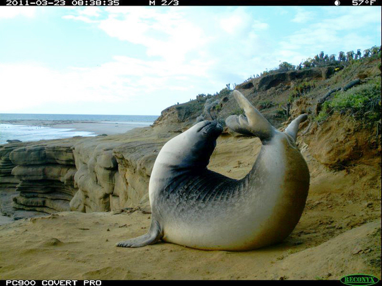 Motion-activated cameras capture animals being wild, weird