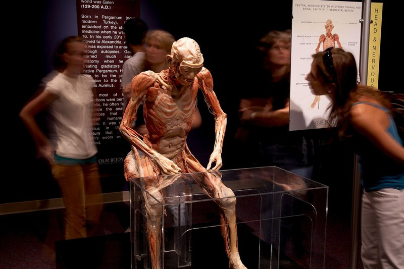 Traveling OUR BODY: The Universe Within Exhibit Extends Stay in Omaha