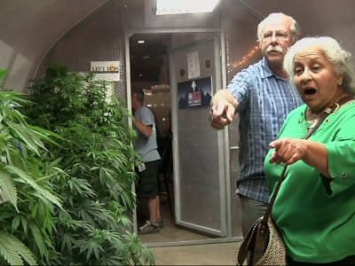 Pot plants displayed at Oregon State Fair
