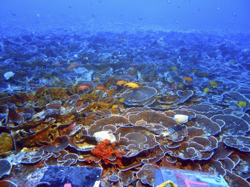 Twilight Zone Ocean >> Researchers Find Abundant Life In Hawaii S Twilight Zone