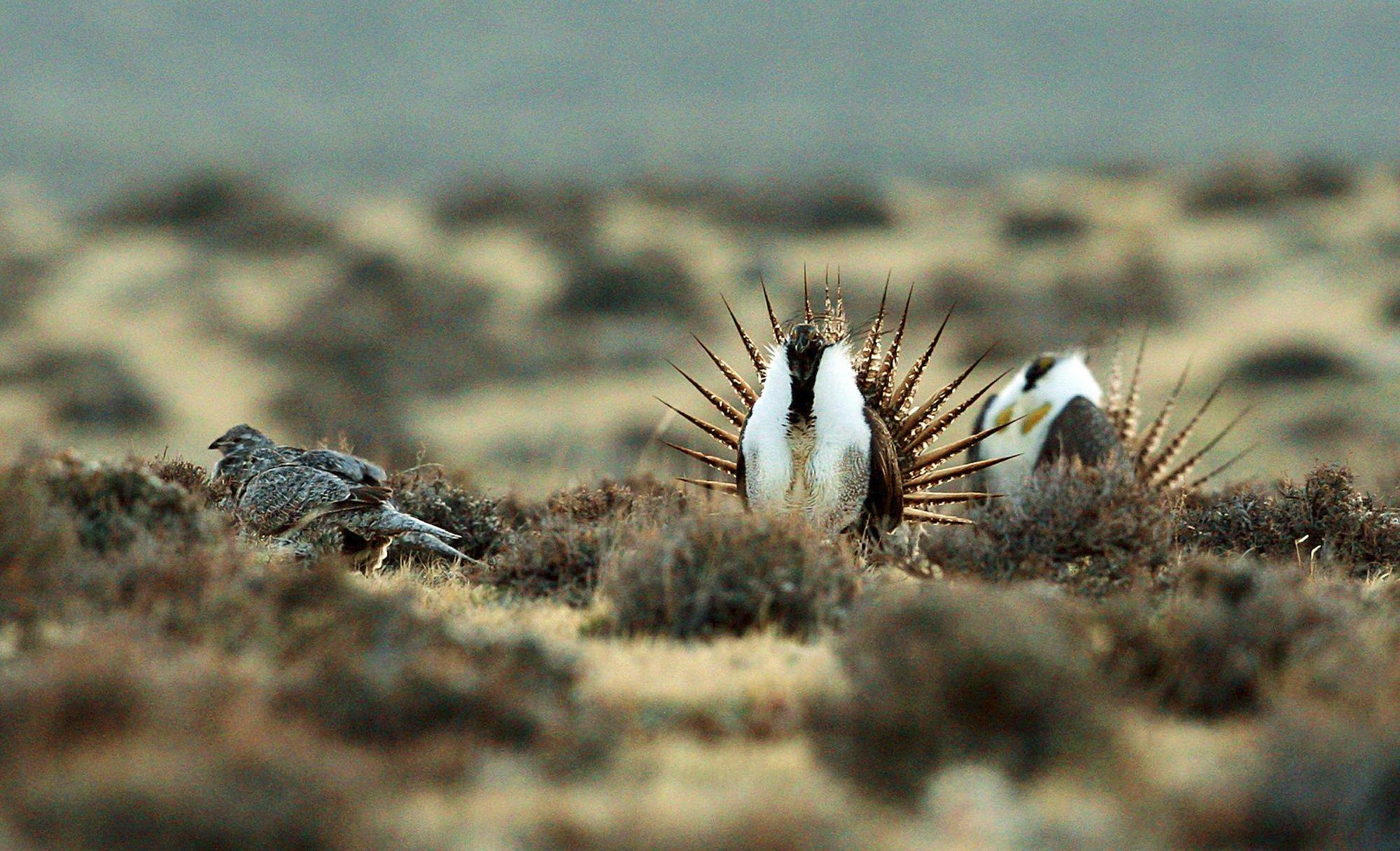 Conservation groups ask judge to halt Trump drilling plan