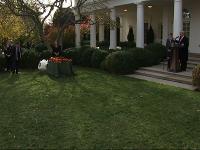 Trump Pardons Thanksgiving Turkeys at the WH