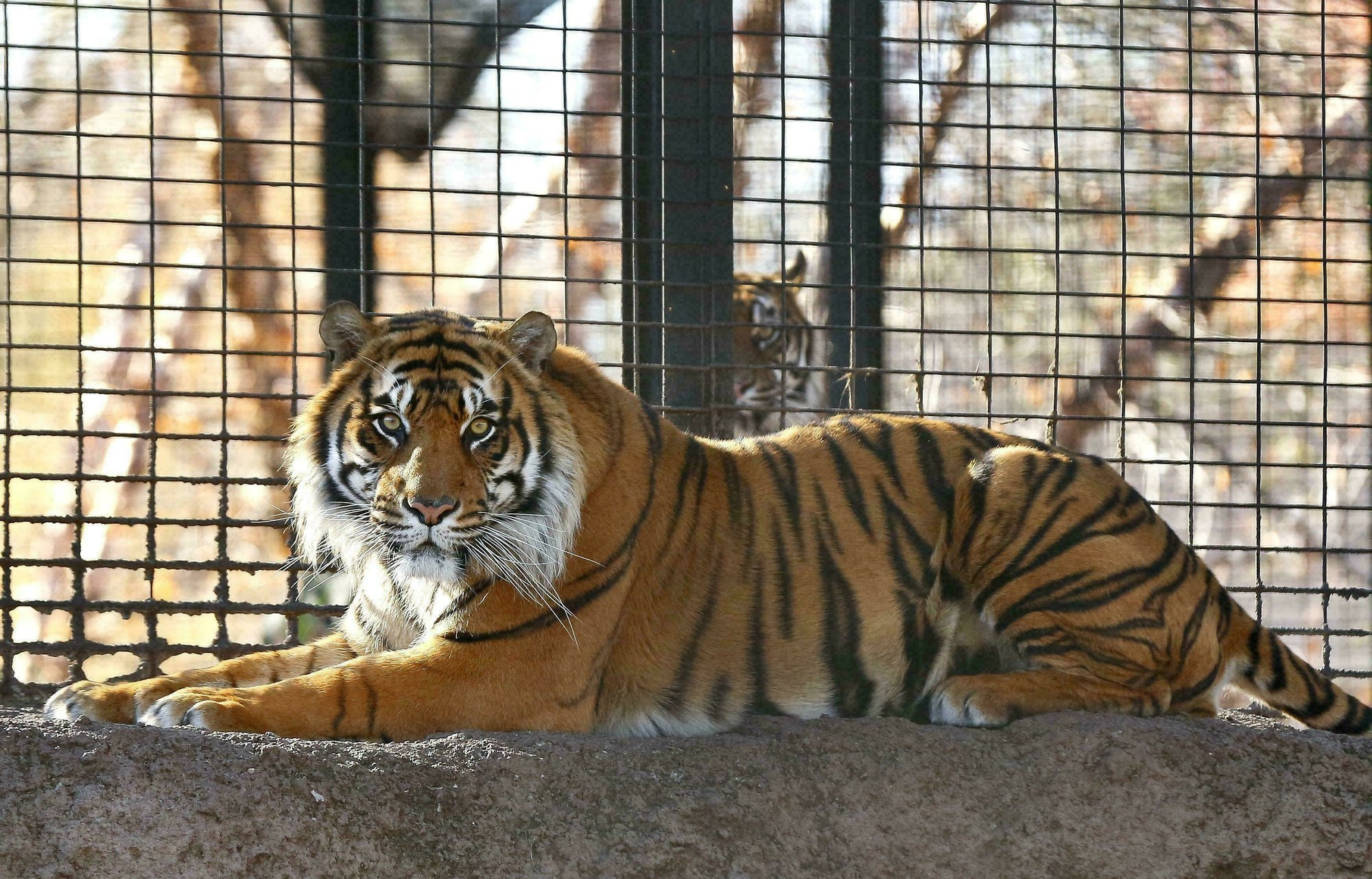 Kansas zookeeper attacked by tiger is out of intensive care