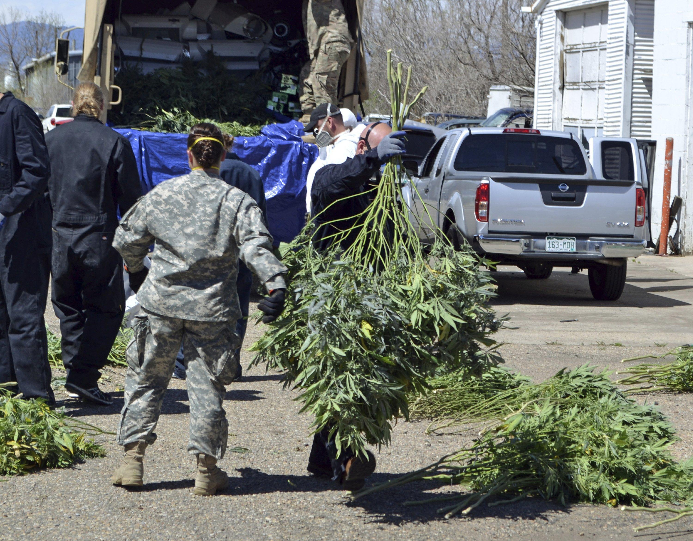 Colorado marijuana market funds busts of illegal growers