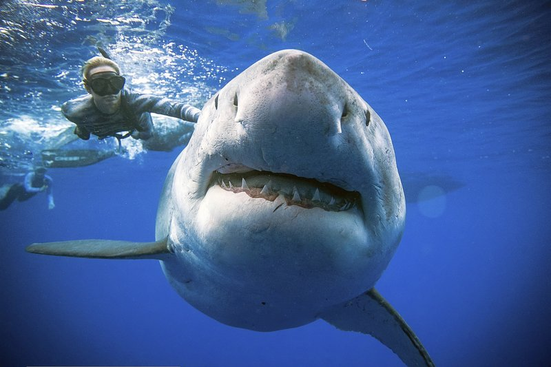 Surfer in Australia Survives Great White Shark Attack That Was Like Being 'Hit by a Truck'
