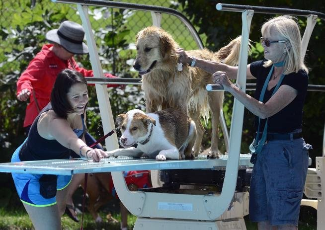 Dog Dayz at Boulder's Scott Carpenter Pool Caps the Summer: 'It's Disneyland for Her'