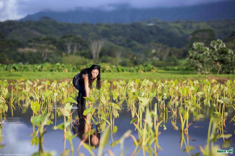 Shortage of key Hawaii crop expected after rains swamp farms
